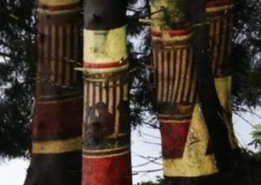 cropped-anna5-e1510550042862.jpg