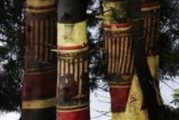 cropped-anna5-e15105500428621.jpg