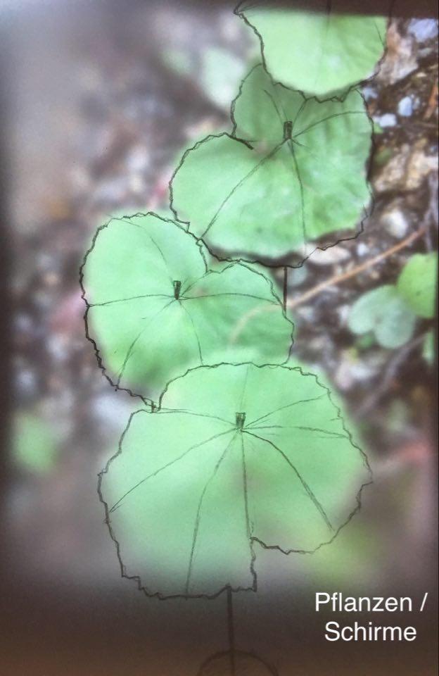 Anna Stadler_ Pflanzen _ Schirme