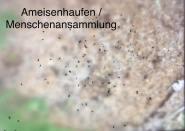 Anna Stadler_Ameisenhaufen _ Menschenansammlung